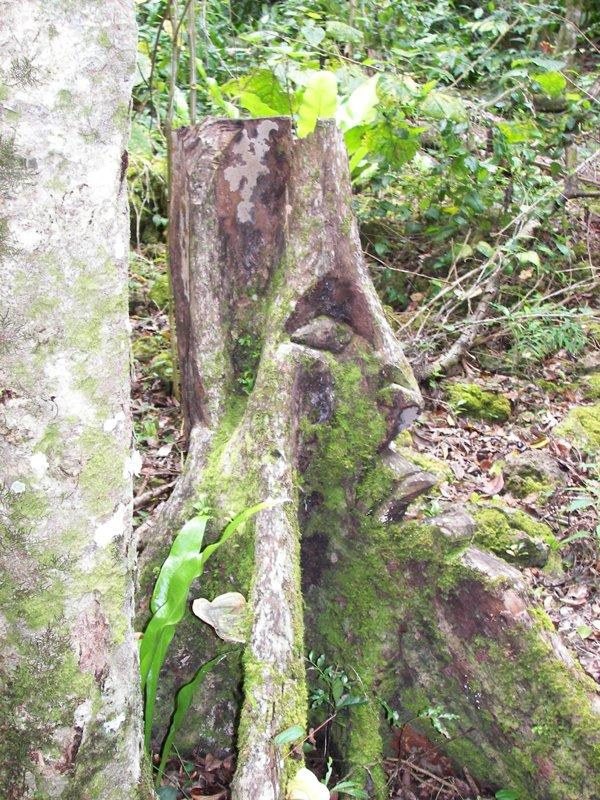 Lila's Lifou Pics (9)