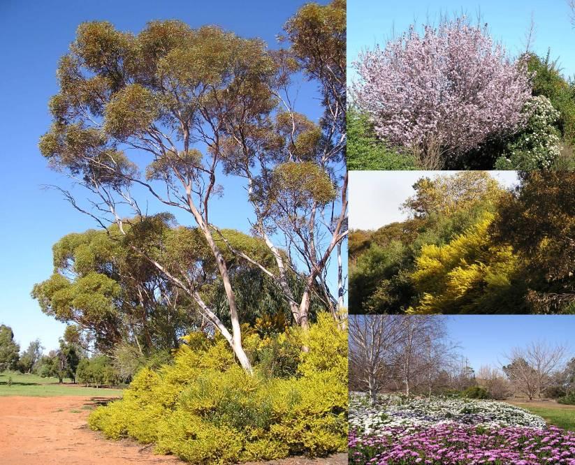 Mildura Gardens.jpg