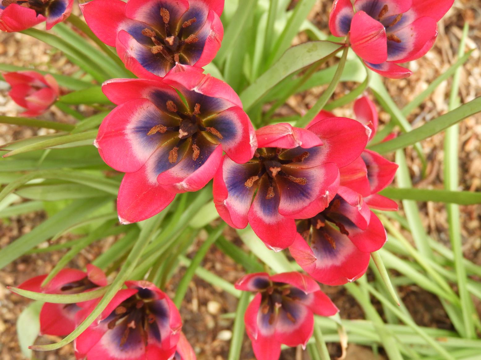 A VERY long weekend … Eltham Palace spring gardens